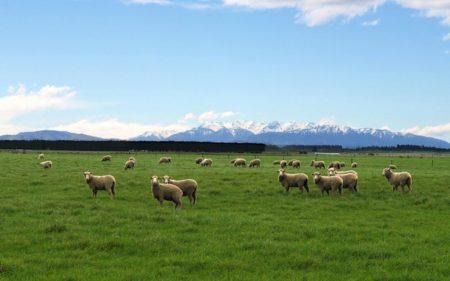 ニュージーランド_004