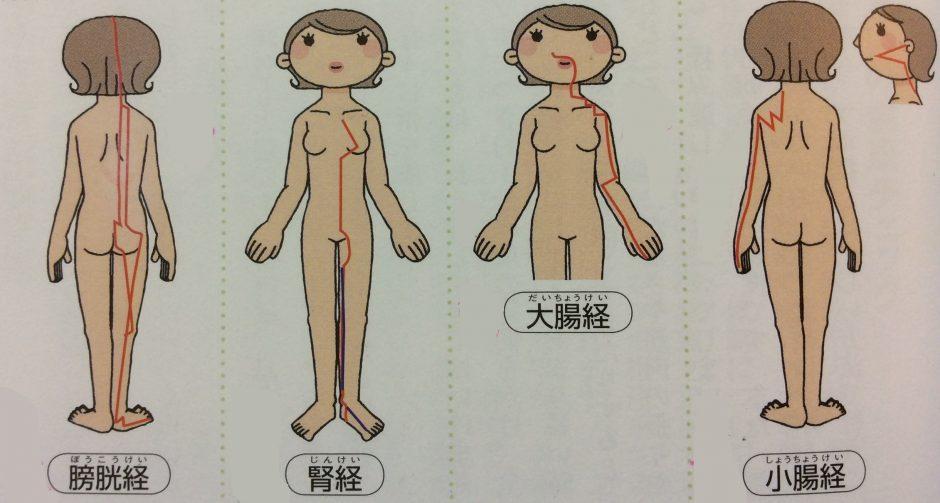 膀胱経、腎経、大腸経、小腸経