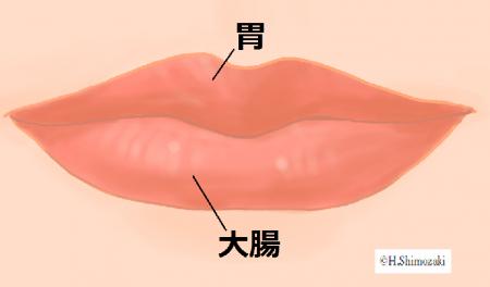 唇_胃大腸