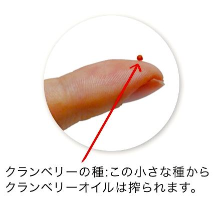 クランベリー種子