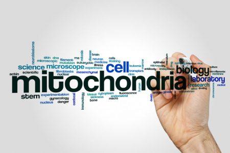 73732936 - mitochondria word cloud concept