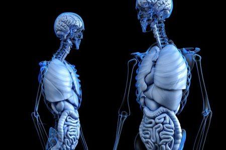 腸 脳 がいこつ