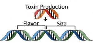 遺伝子組み換え作物のしくみ