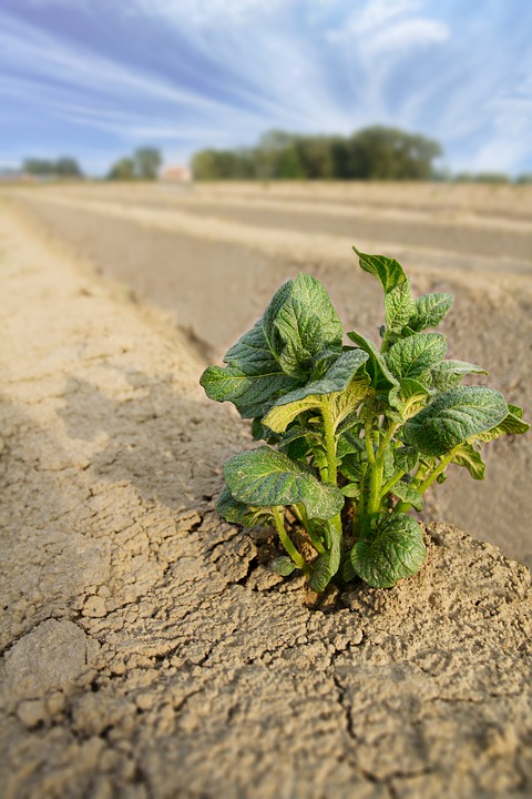 agriculture-2384562_960_720