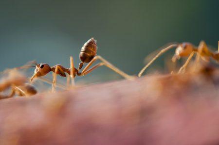 ants-1868024_640