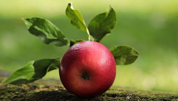 apple-2924531__340