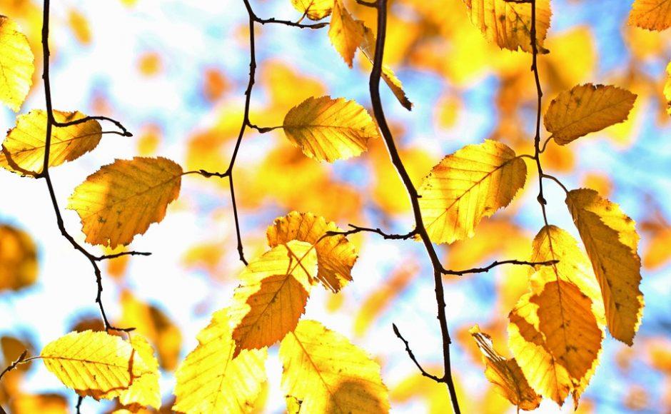 autumn-1042346_960_720