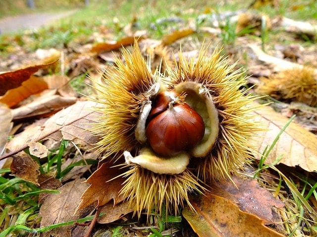 autumn-199942_640-min