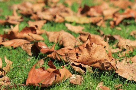 autumn-473059_960_720