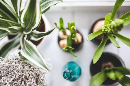 観葉植物houseplants-792091_640