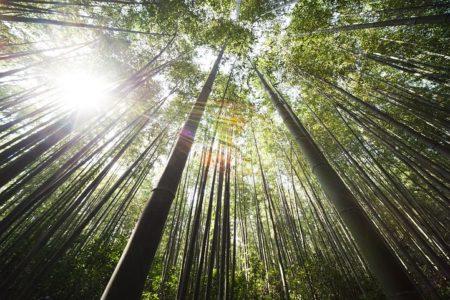 bamboo-364112__480