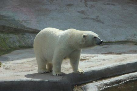 bear-2162631_640