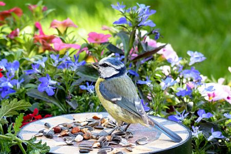 bird-2361976_960_720