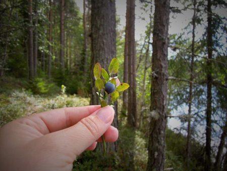 blueberry-1579046__480