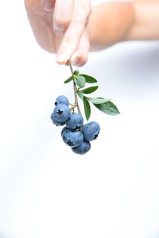 blueberry-539134__480