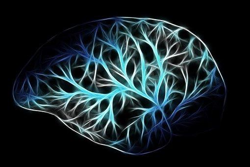 brain-2676370__340