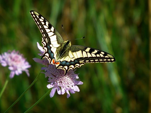 butterfly-2046635_640