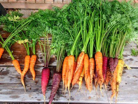 carrot-2743498_640