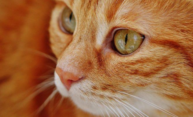 cat-1652822_960_720