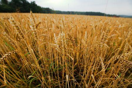 cereals-3311402_640
