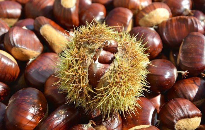 chestnut-2804035_960_720