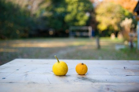 citrus-fruits-648317_640