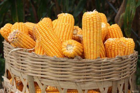 coarse-cereals-2688459_640