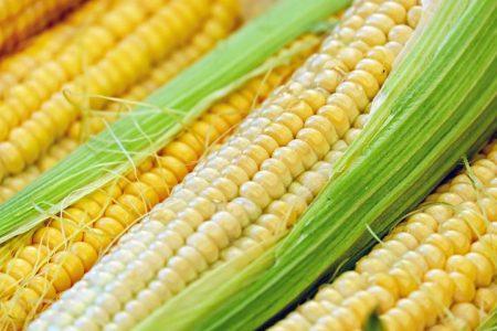 corn-1605664__480