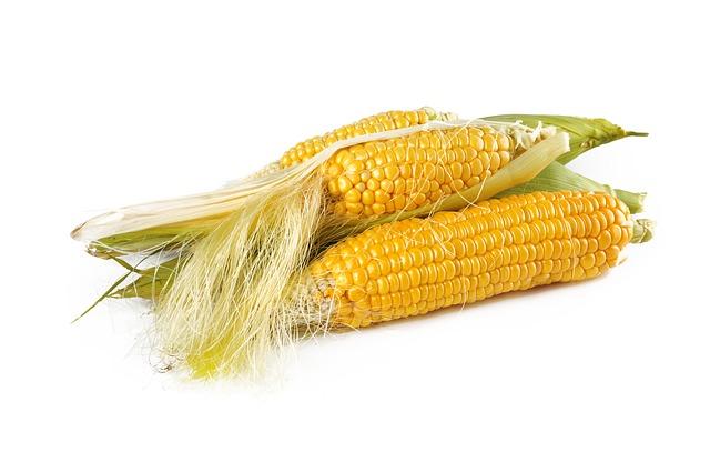 corn-1751321_640