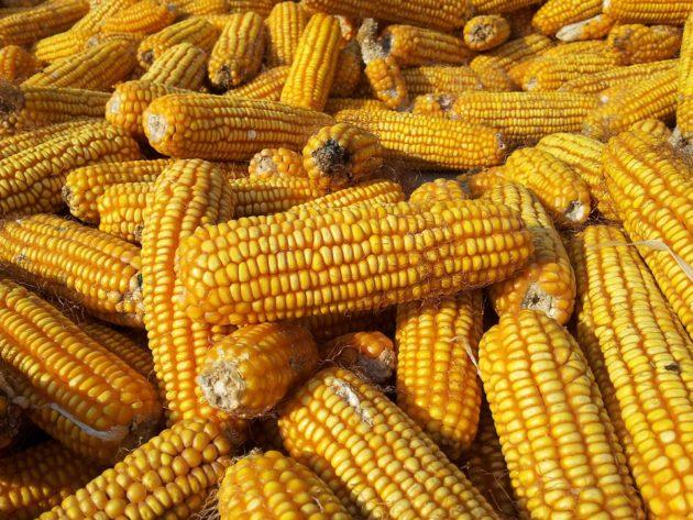 corn-187781_960_720