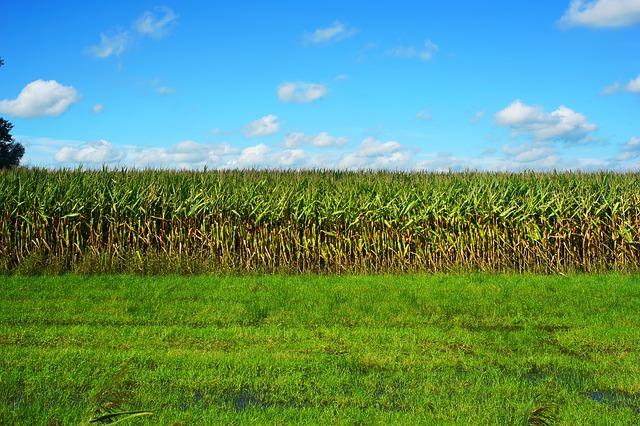 corn-2735619_640