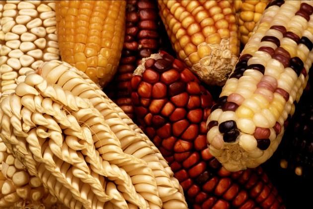 corn-63061_960_720