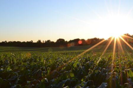 corn-691634_640