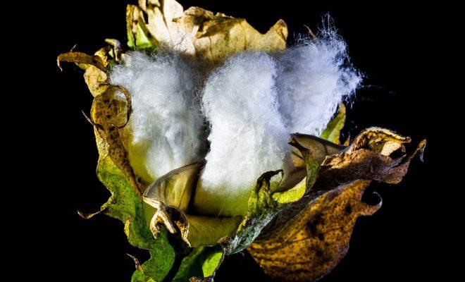 cotton-capsule-293692_960_720