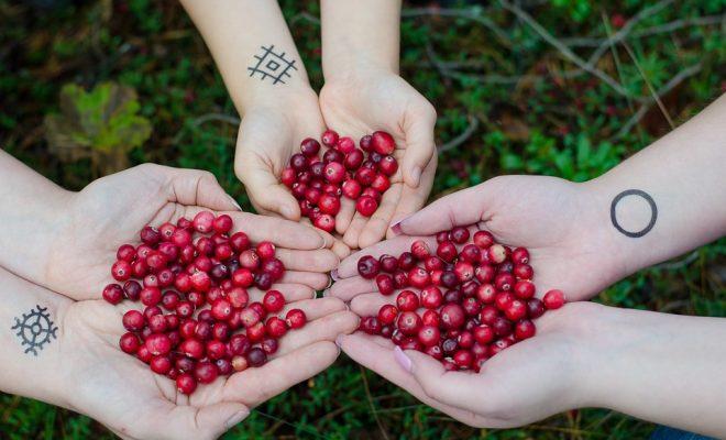 cranberries-2810138_960_720