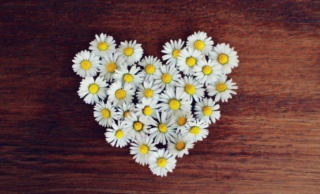 daisy-1403041_960_720-min