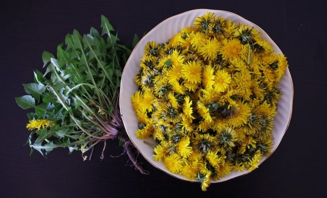 dandelion-health-salad-flowers-161598