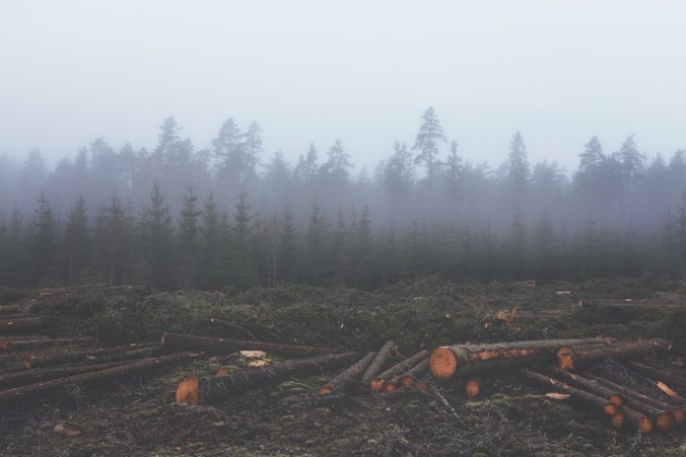 パーム油生産によって破壊された森林