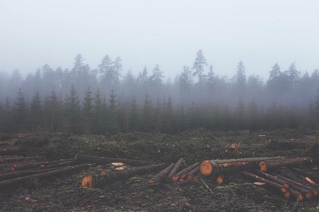 deforestation-351474_640