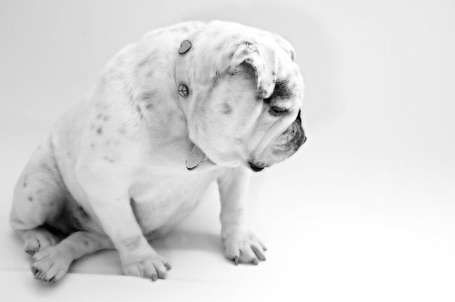 dog-84439_640
