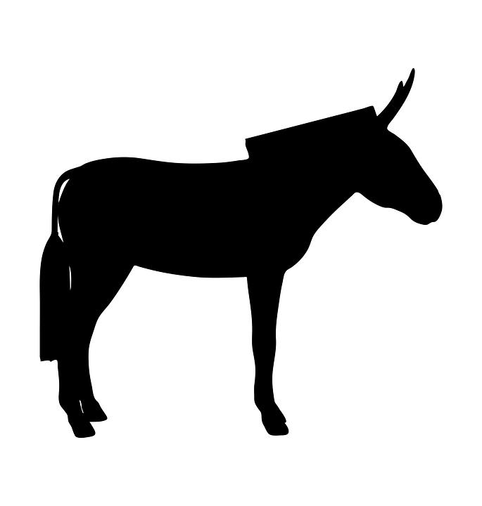 donkey-2690221_960_720