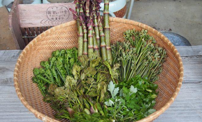 edible-wild-plants-972998_960_720