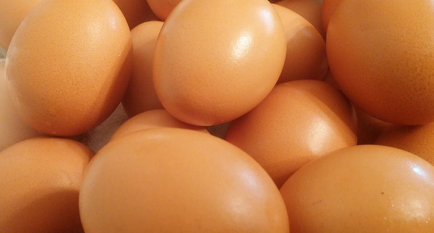 eggs-449191__480