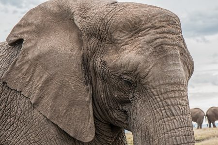 elephant-1526709_640