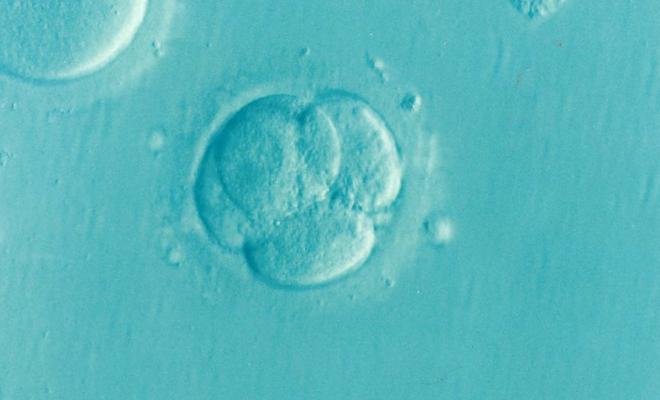 embryo-1514192_960_720