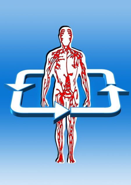 血の流れ_body-75304_640