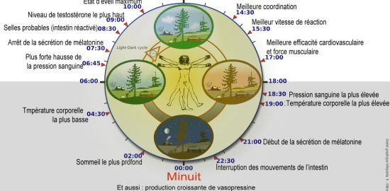 Biological_clock_humanNycthéméralFrenchVersion