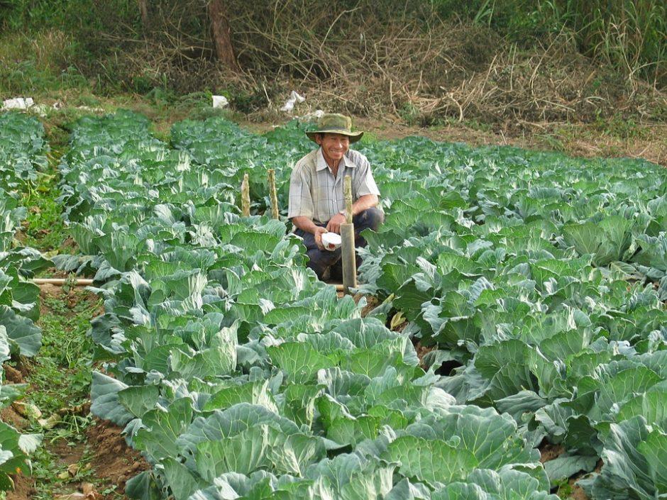 farmer-439914_960_720