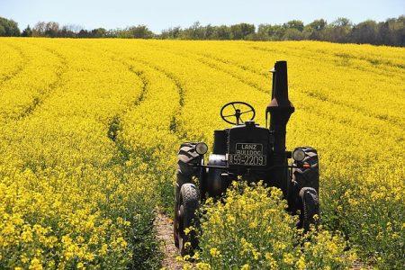 菜種畑を走るトラクター