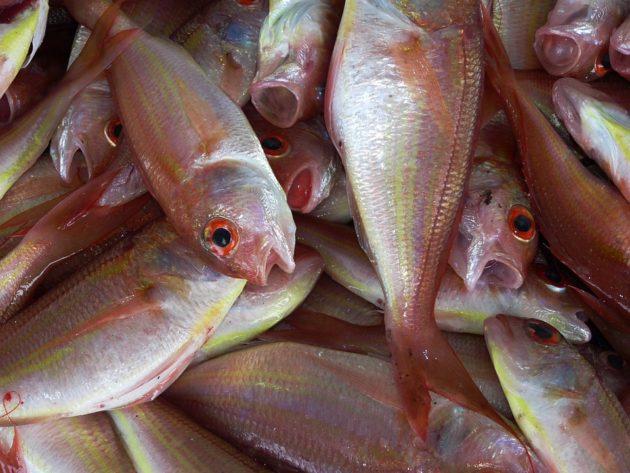 fish-234677_960_720